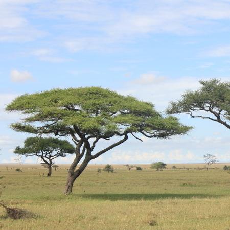 4d938320ee70c2 Neema Tours - Ervaar de cultuur en natuur van Oost-Afrika